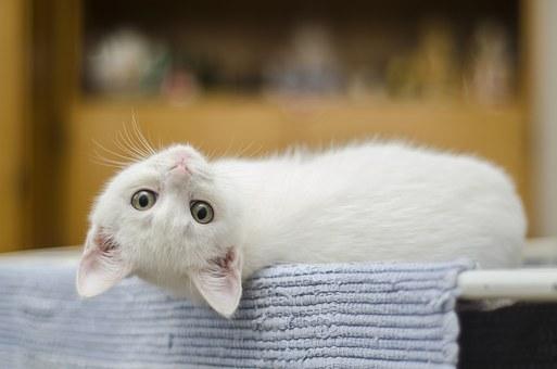 Reken af met kattenurine